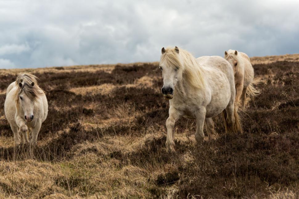 Download Free Stock HD Photo of Pregant horses Online