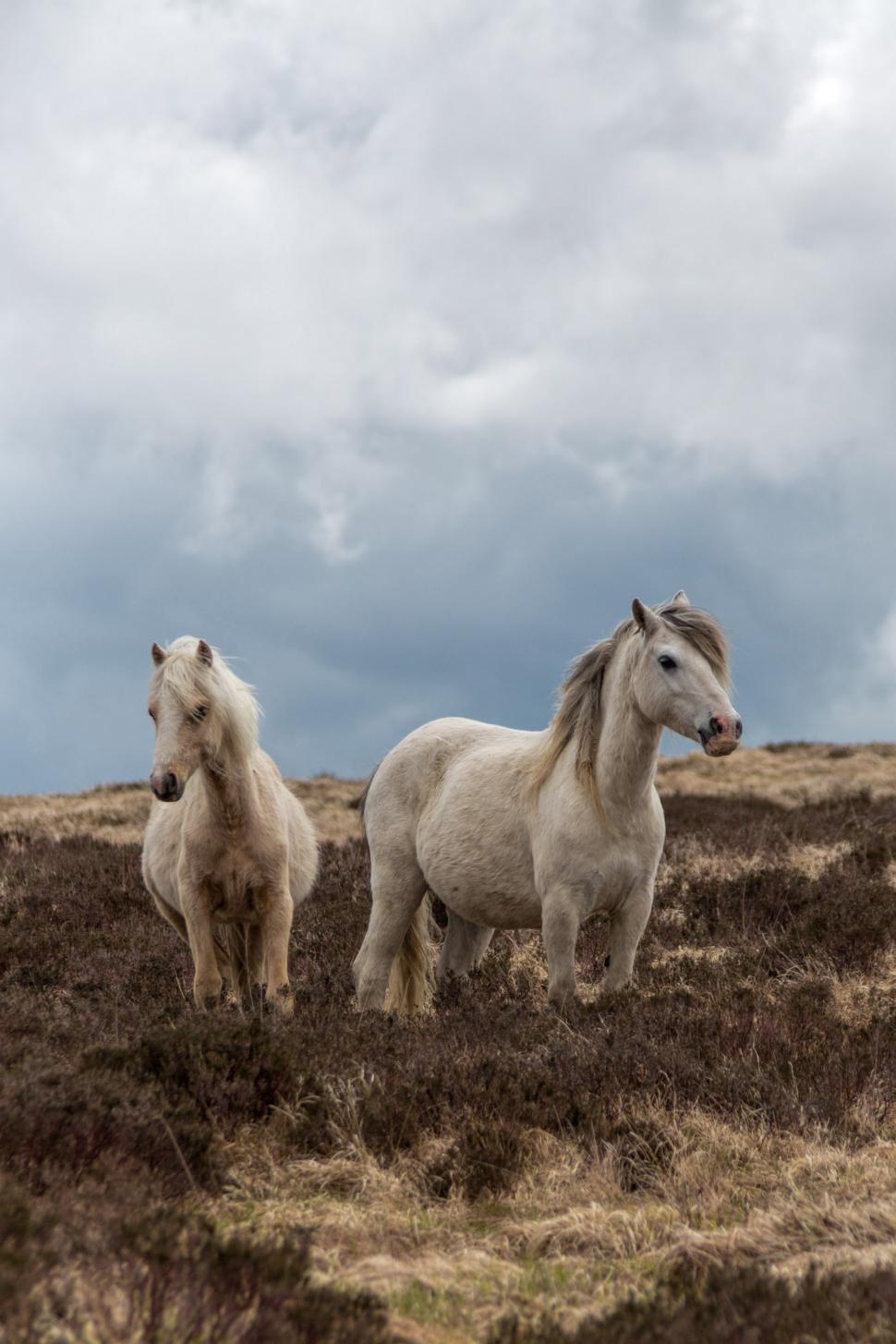 Download Free Stock HD Photo of Two horses Online