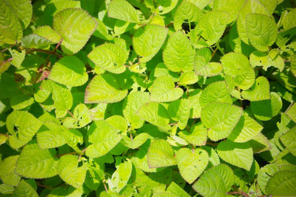 Download Free Stock HD Photo of Green leaves texture  Online