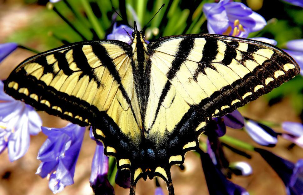 Download Free Stock HD Photo of Wings Of Love Online