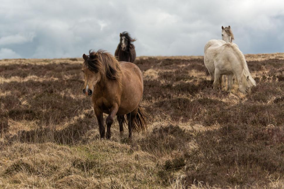 Download Free Stock HD Photo of Beautiful horses Online