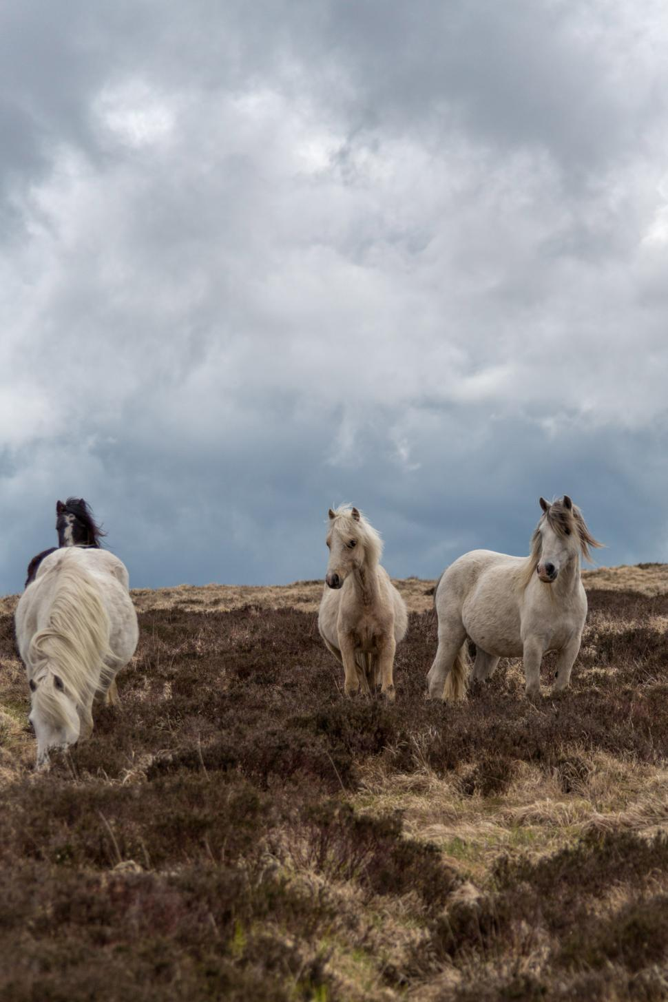 Download Free Stock HD Photo of Horses in field Online