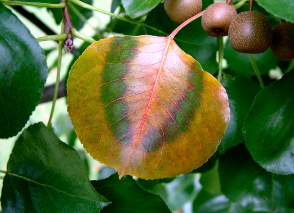 Download Free Stock HD Photo of Autumn Orange and Green Online