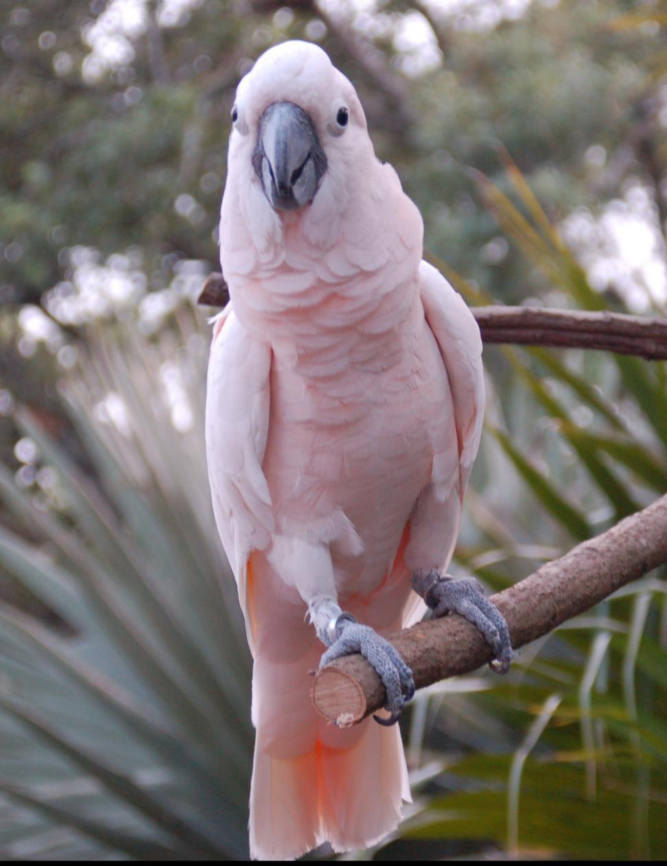 Download Free Stock HD Photo of Pink Bird in New Orleans Zoo Online