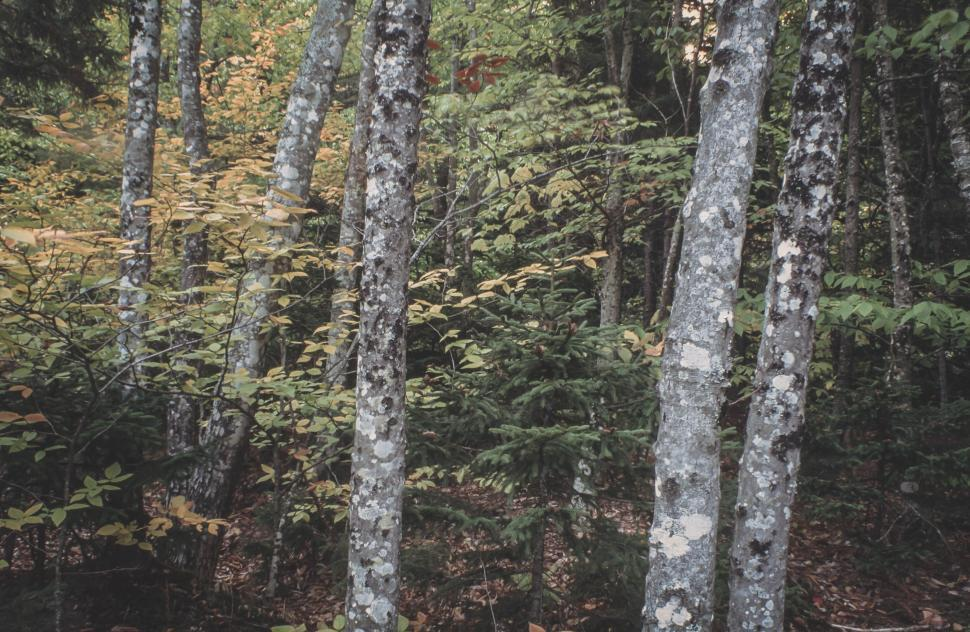 Download Free Stock HD Photo of Fall forest foliage Online