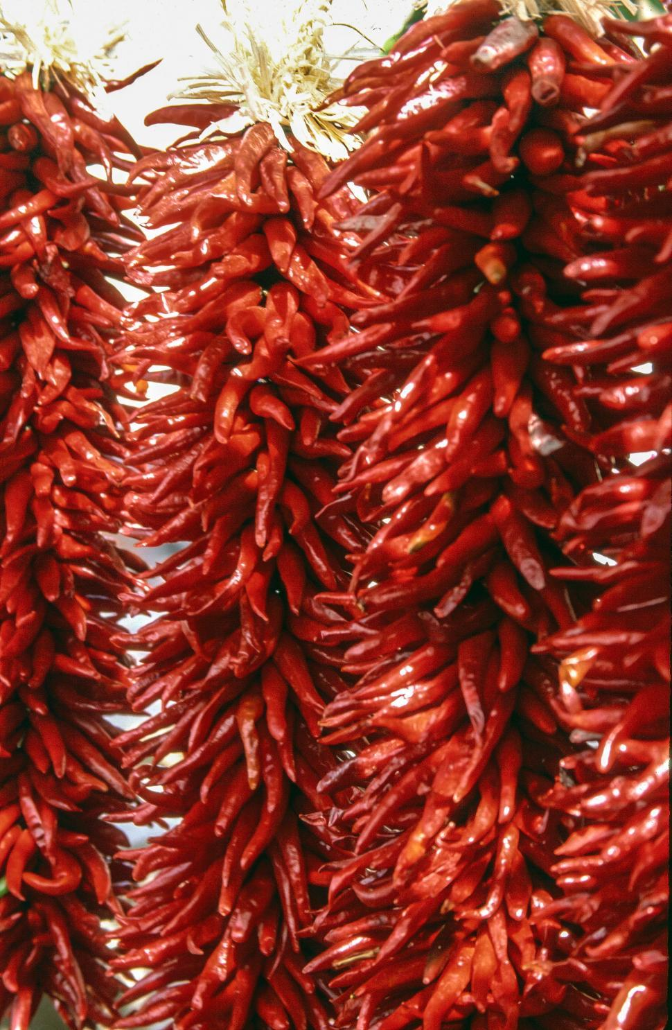Download Free Stock HD Photo of Red chillies Online