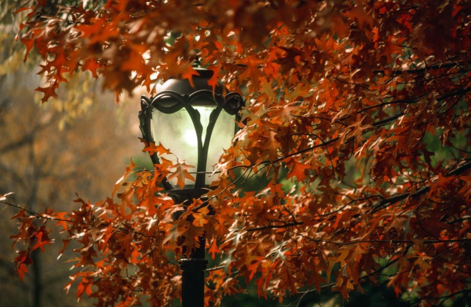 Download Free Stock HD Photo of Street Lamp in Fall Online