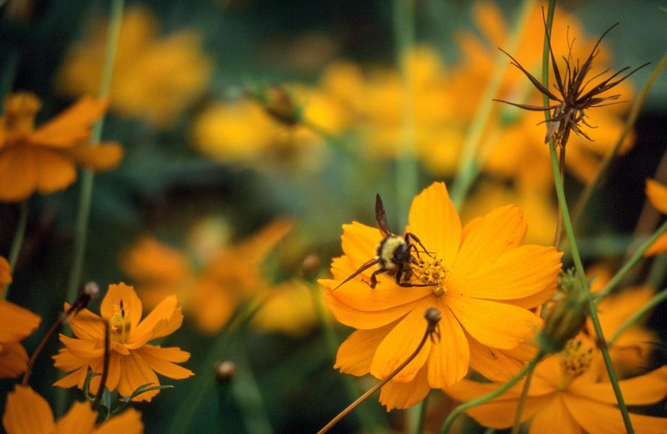 Download Free Stock HD Photo of Bees landing on flower Online