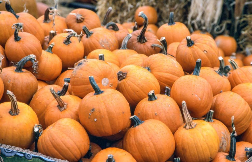 Download Free Stock HD Photo of Fresh Orange Pumpkins Online