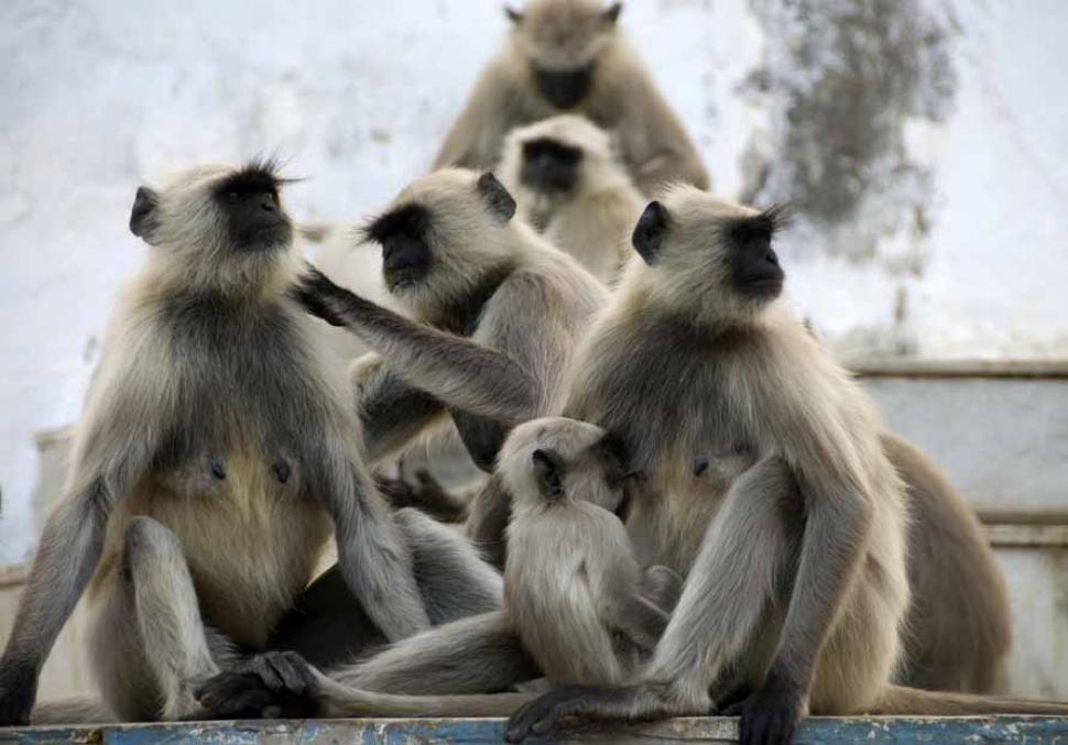 Download Free Stock HD Photo of Monkey Clan Online