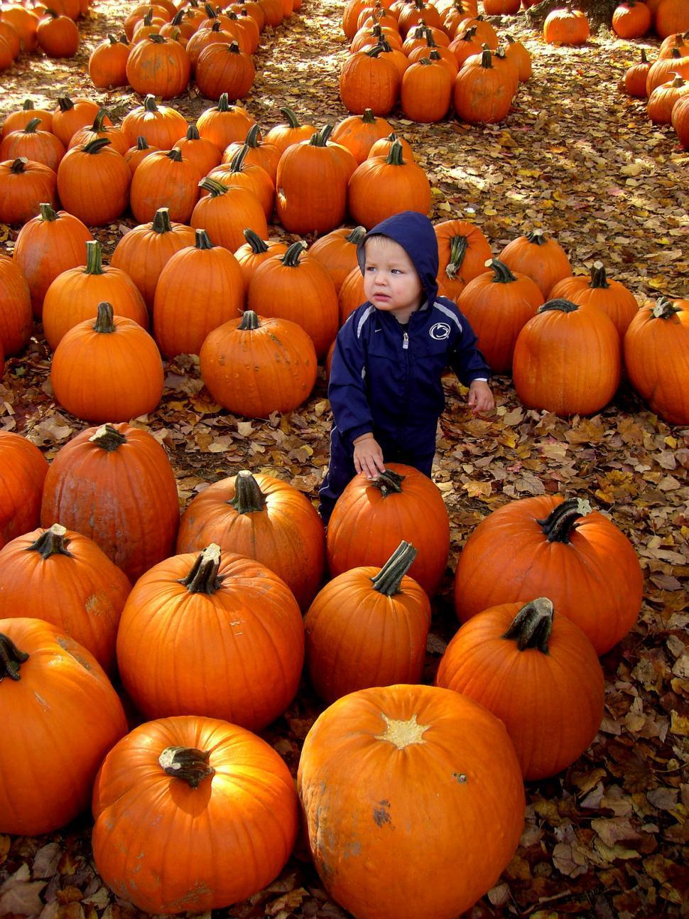 Download Free Stock HD Photo of Fall - Little boy in pumpkin patch Online