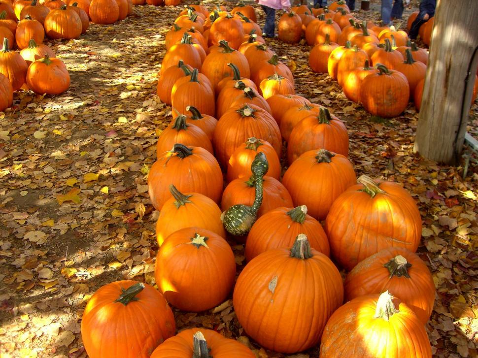 Download Free Stock HD Photo of Fall -  Pumpkin Patch Online