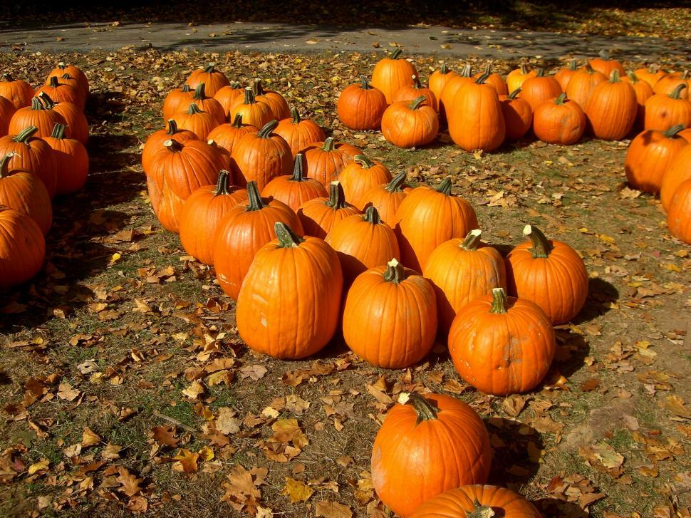 Download Free Stock HD Photo of Fall - Scattered Pumpkina Online