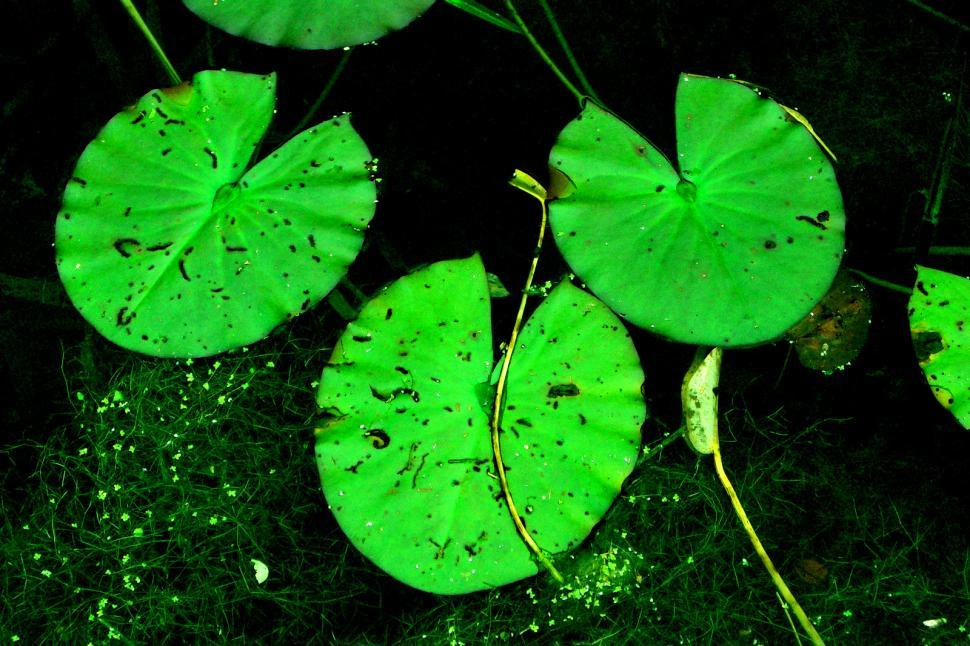 Download Free Stock HD Photo of Ireland - Lilly Pads Online