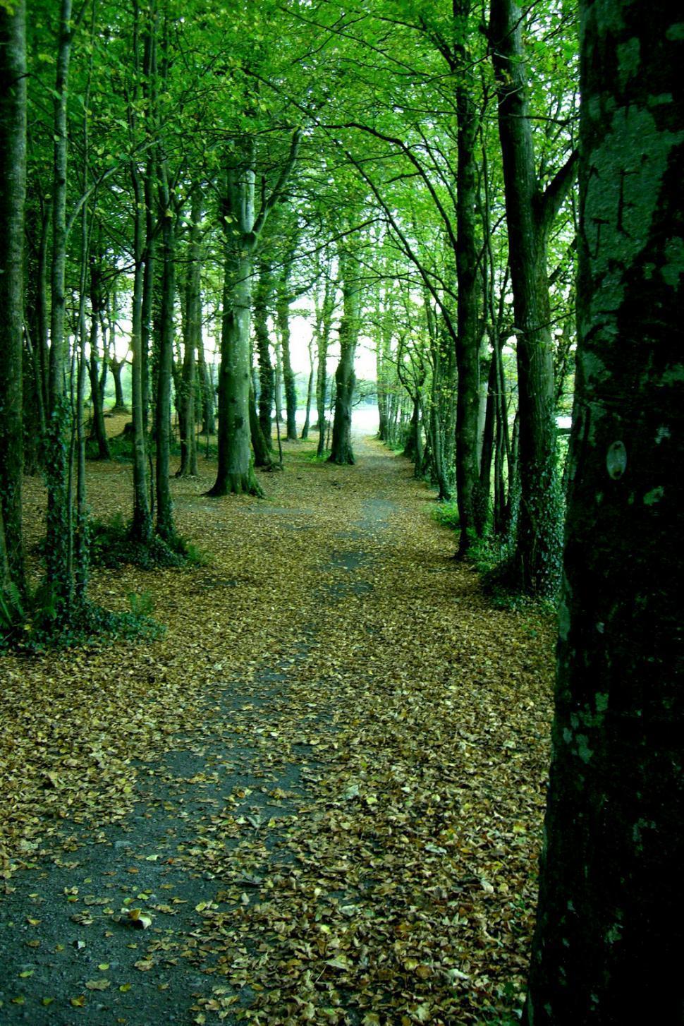 Download Free Stock HD Photo of Ireland - Walking Path Online