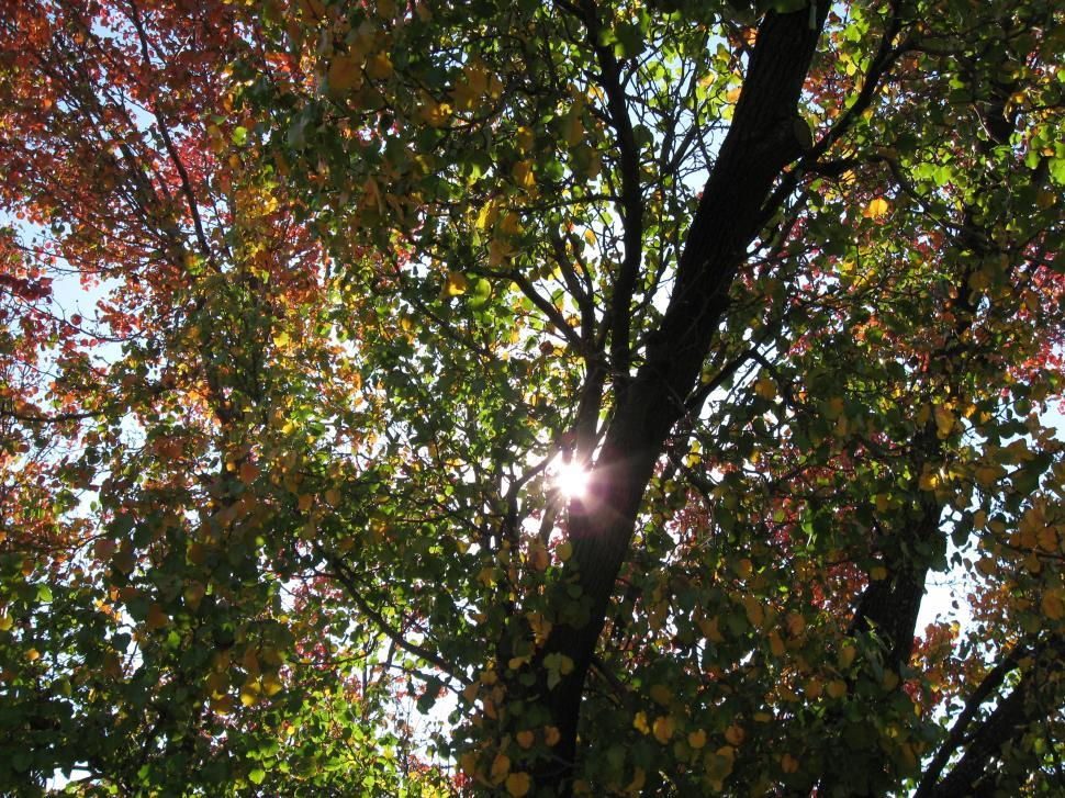Download Free Stock HD Photo of Sun shining through leaves Online