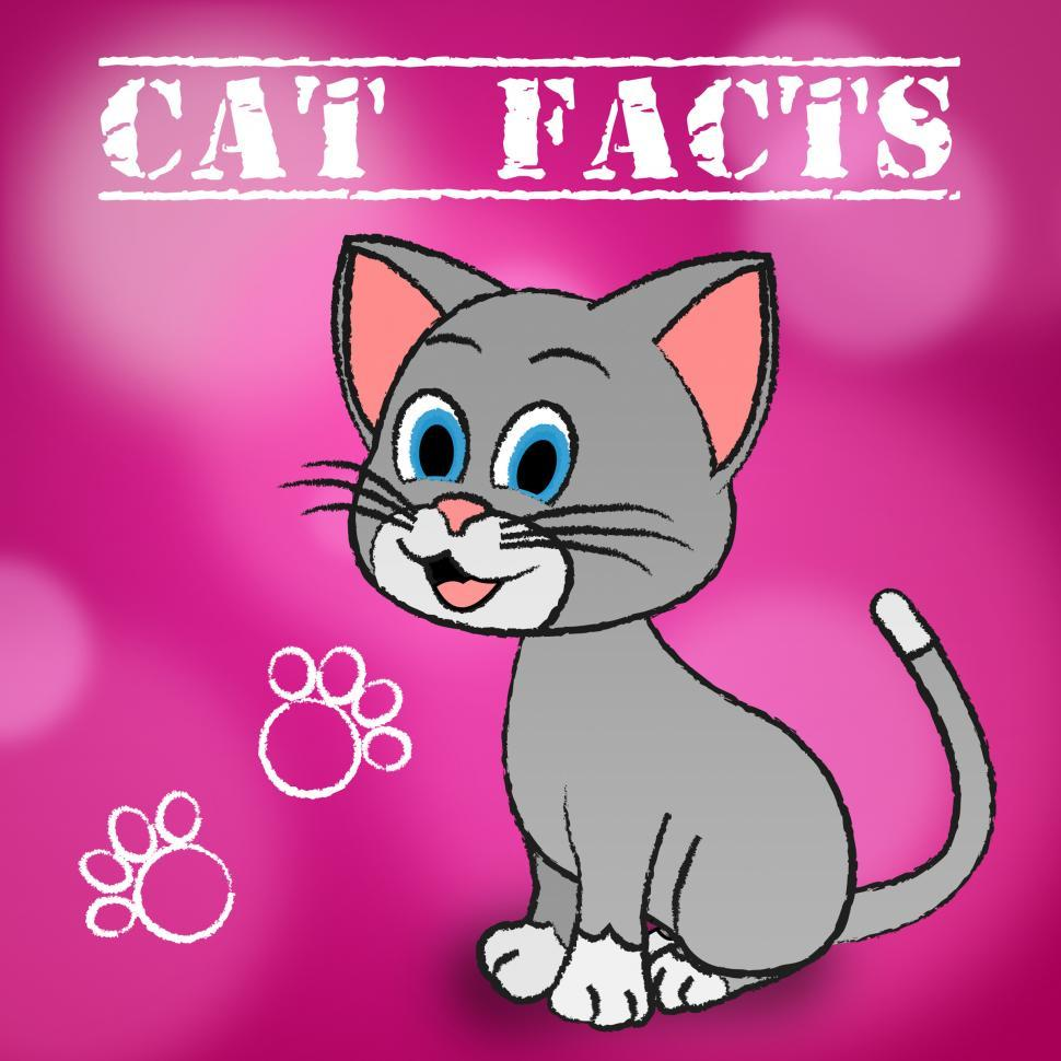 get free stock photos of cat facts indicates details kitty and pets