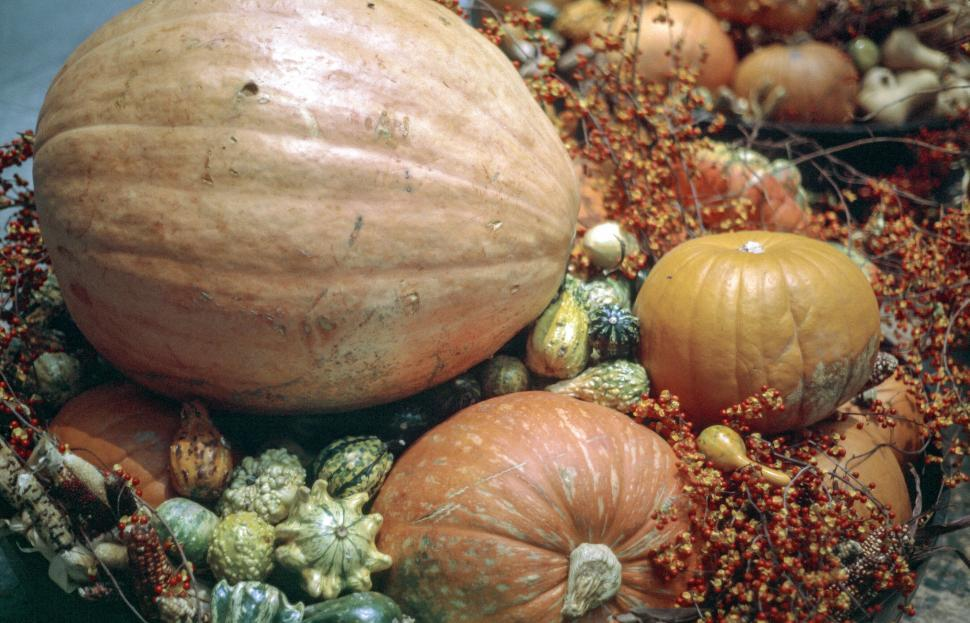 Download Free Stock HD Photo of Pumpkins - Fall arrangement Online