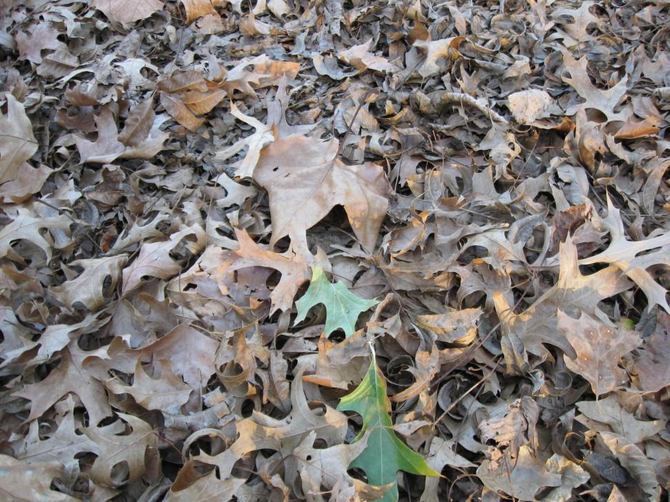 Download Free Stock HD Photo of Leaves Scattered on Ground Online