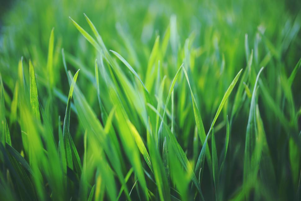 Download Free Stock HD Photo of Green grass Online