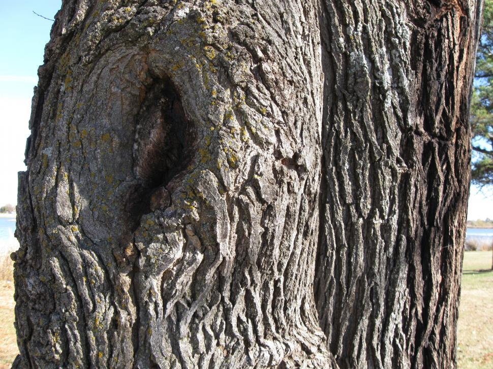 Download Free Stock HD Photo of Hole in the tree Online