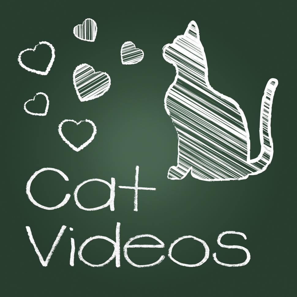 Download Free Stock HD Photo of Cat Videos Represents Audio Visual And Cats Online