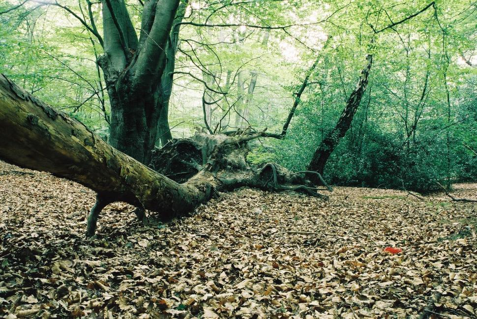 Download Free Stock HD Photo of Forest Floor Online