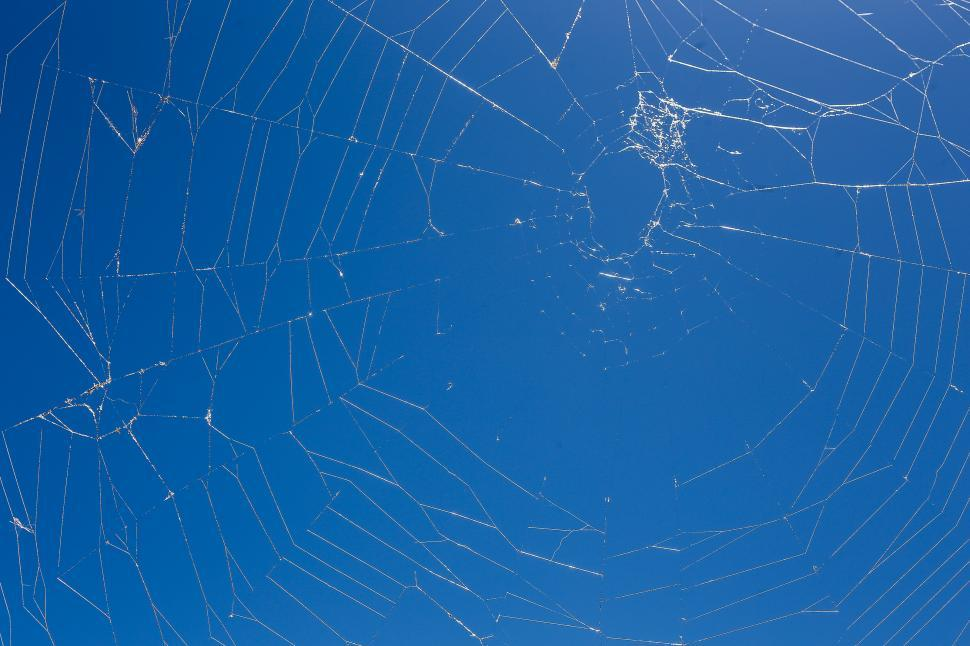 Download Free Stock HD Photo of Spider web in the sun Online