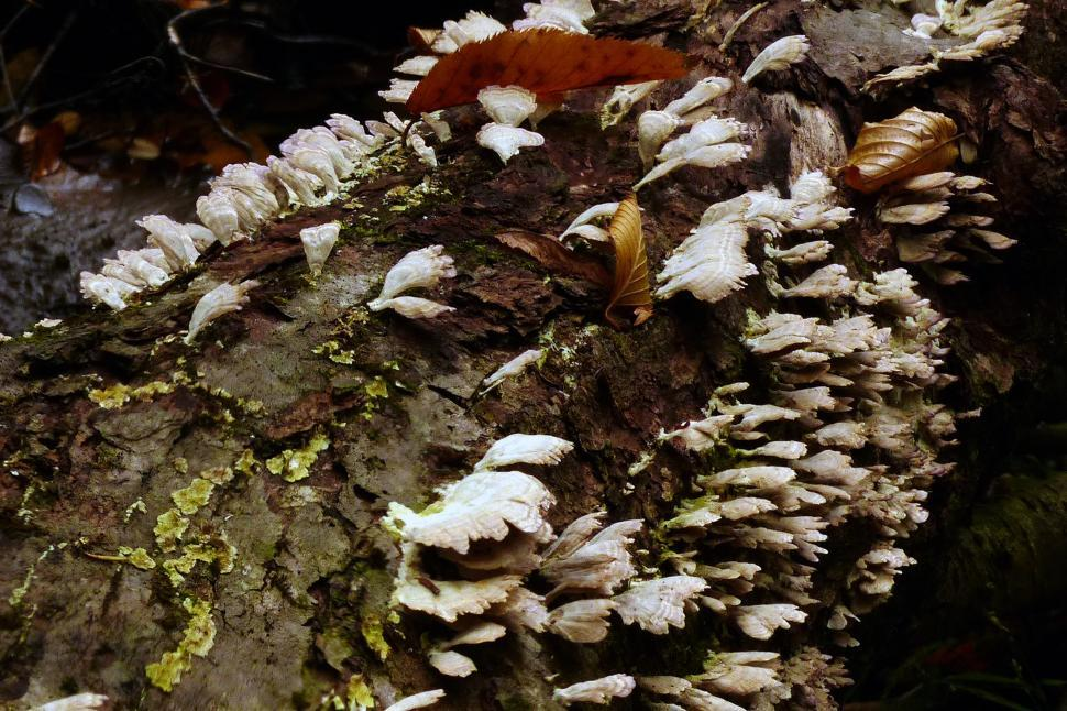 Download Free Stock HD Photo of Fungi And Lichen On A Decaying Tree Trunk Online