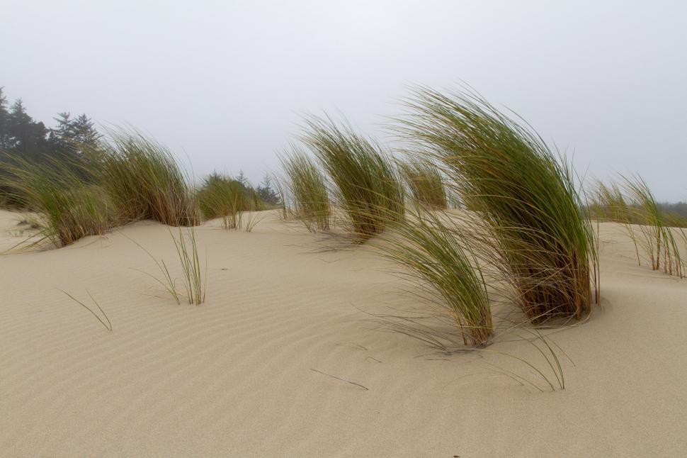 Download Free Stock HD Photo of Sand dunes Online