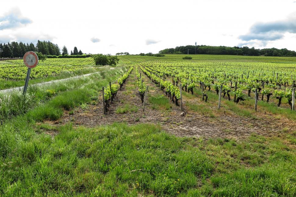 Download Free Stock HD Photo of Vineyard in France Online