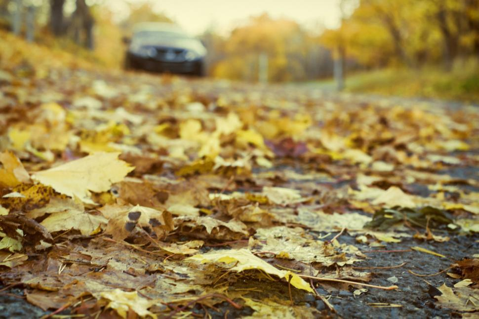 Download Free Stock HD Photo of Autumn road Online