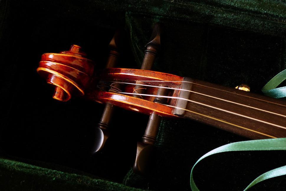 Download Free Stock HD Photo of Violin Peg Box Online