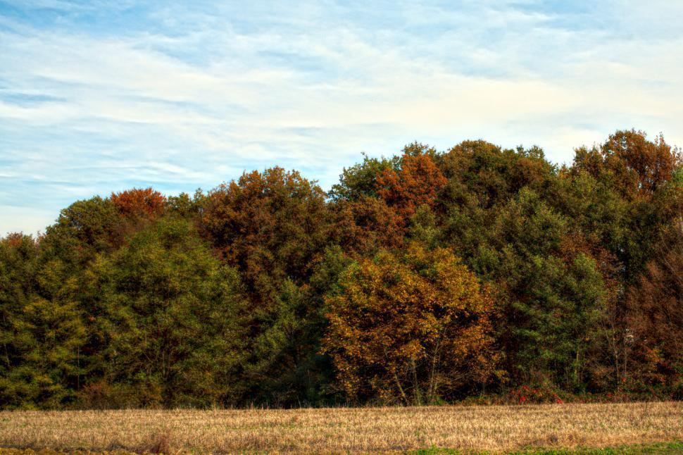 Download Free Stock HD Photo of Autumn colors  Online