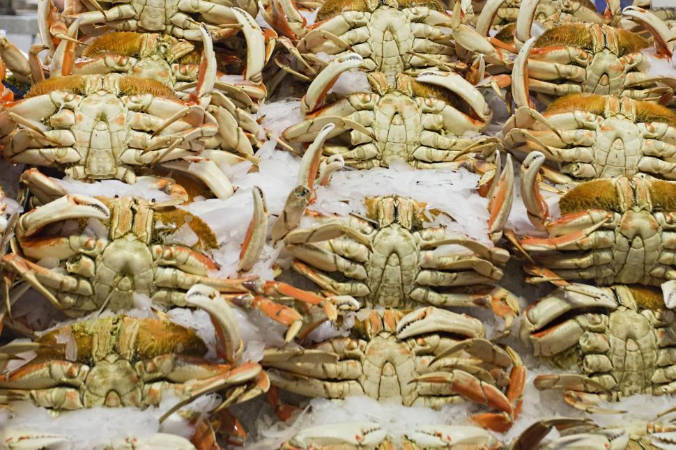 Download Free Stock HD Photo of Fresh crab Online