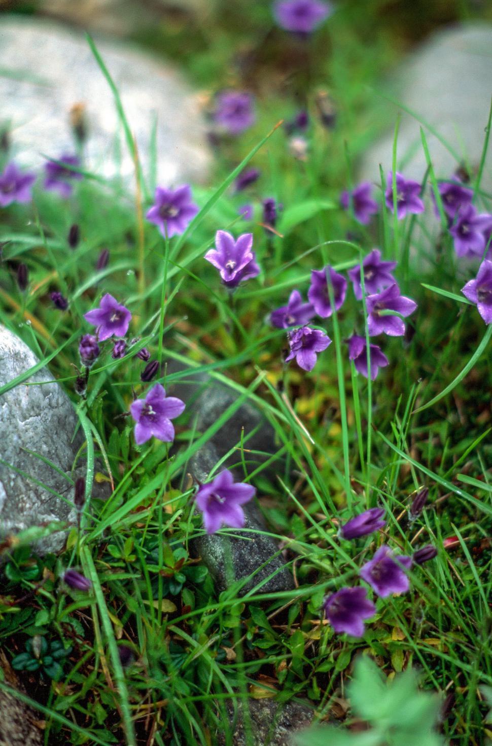 Download Free Stock HD Photo of Wild Geranium Online
