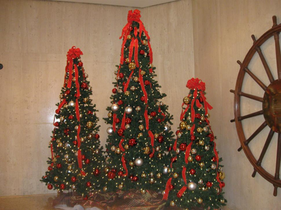 Three Christmas Trees - Get Free Stock Photos Of Three Christmas Trees Online Download