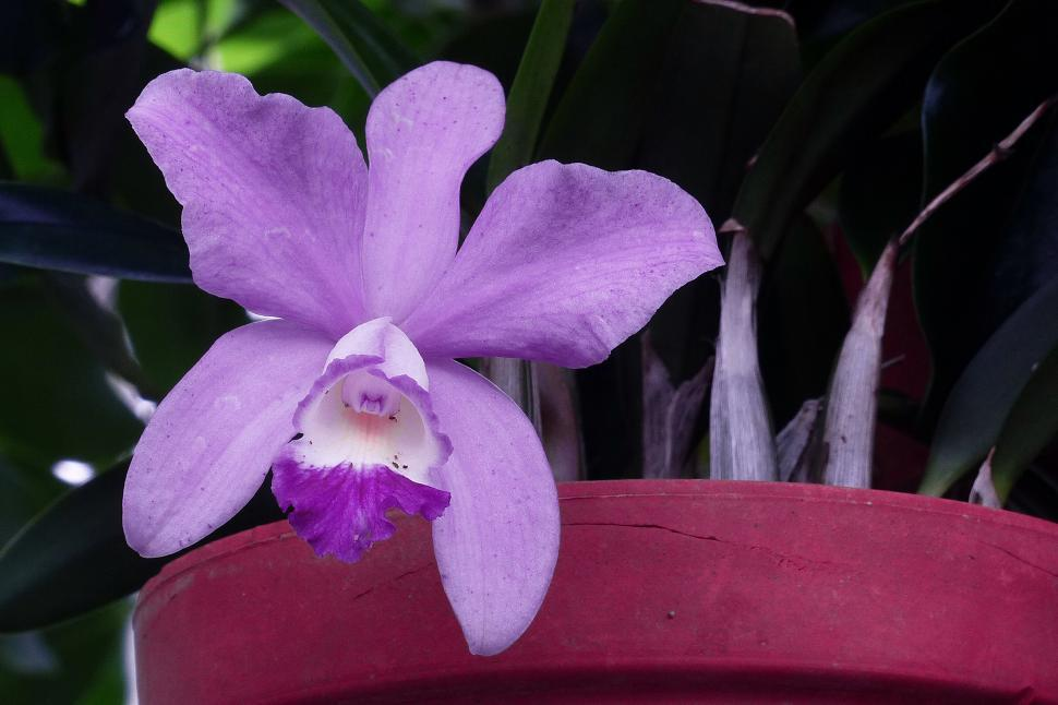 Download Free Stock HD Photo of Purple Violet Orchid Flower Online