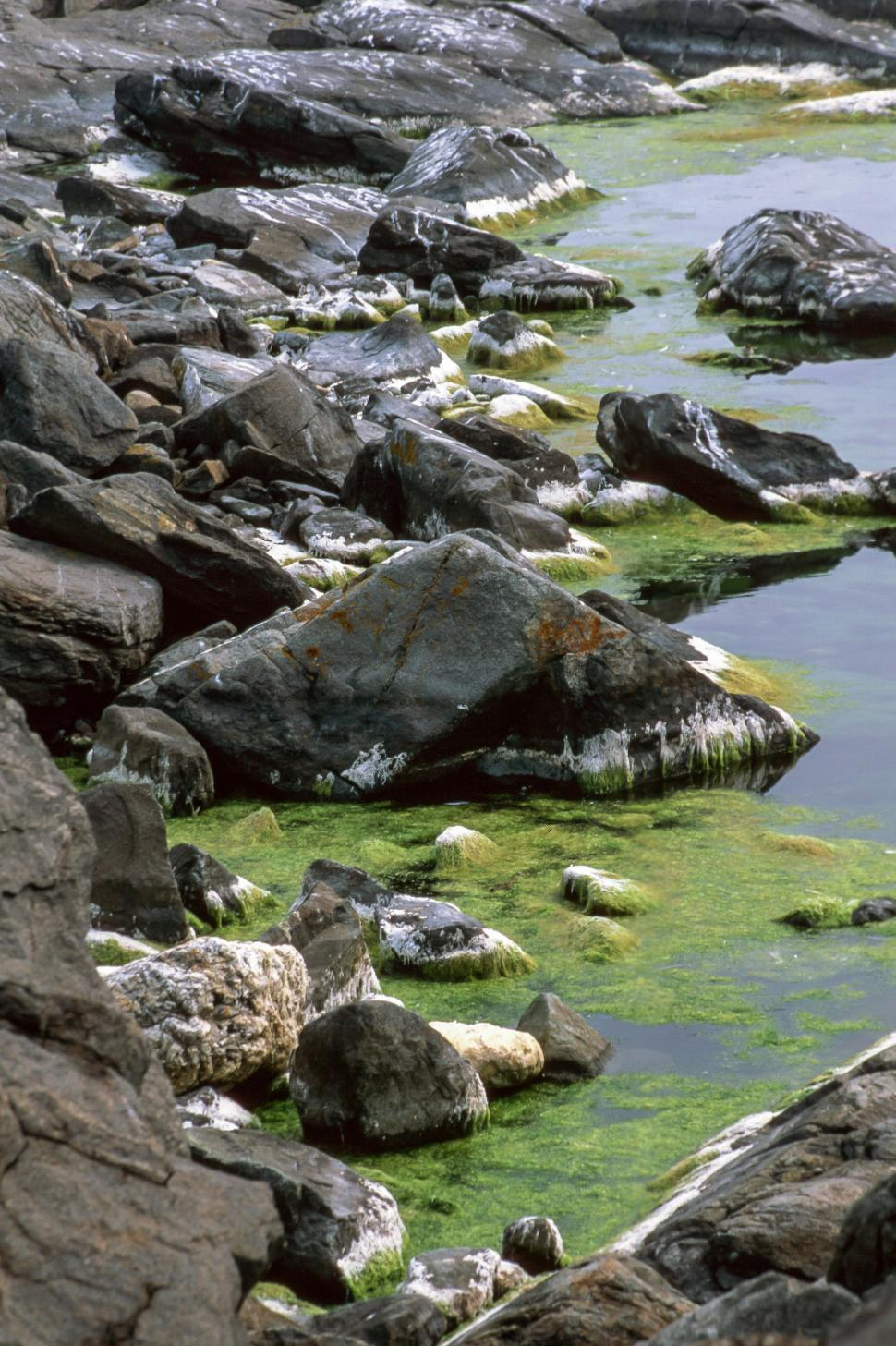 Download Free Stock HD Photo of Rocky Shore and algae Online