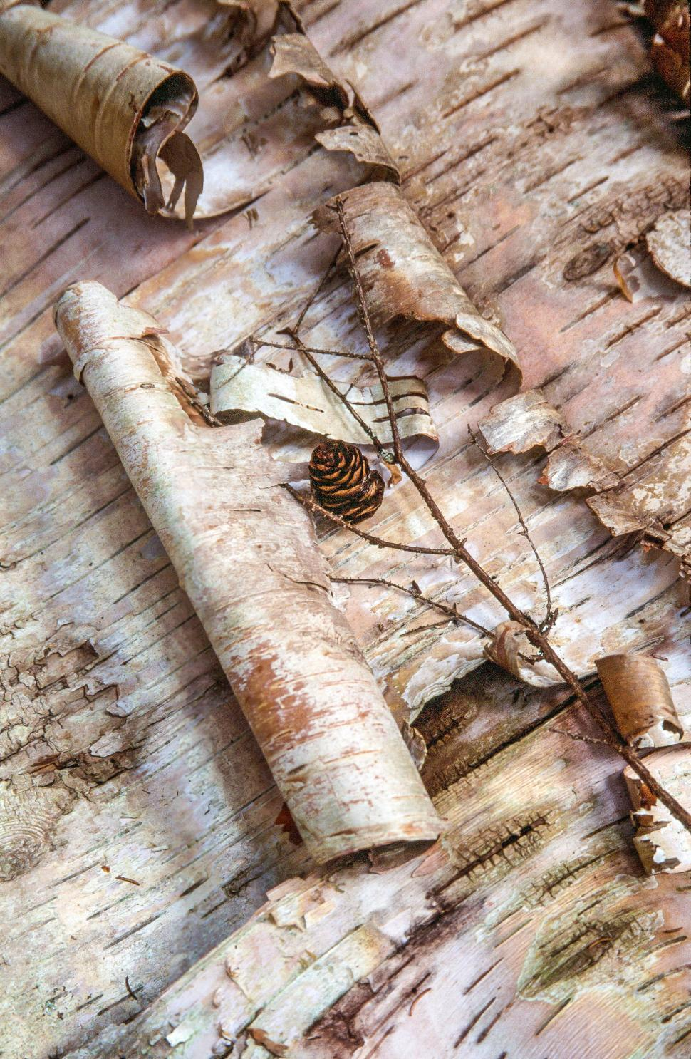 Download Free Stock HD Photo of Tree Flake - Birch Bark Online