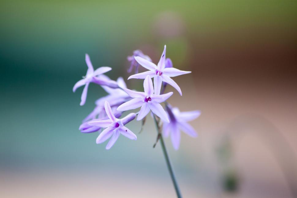 Download Free Stock HD Photo of Pistils flowers Online