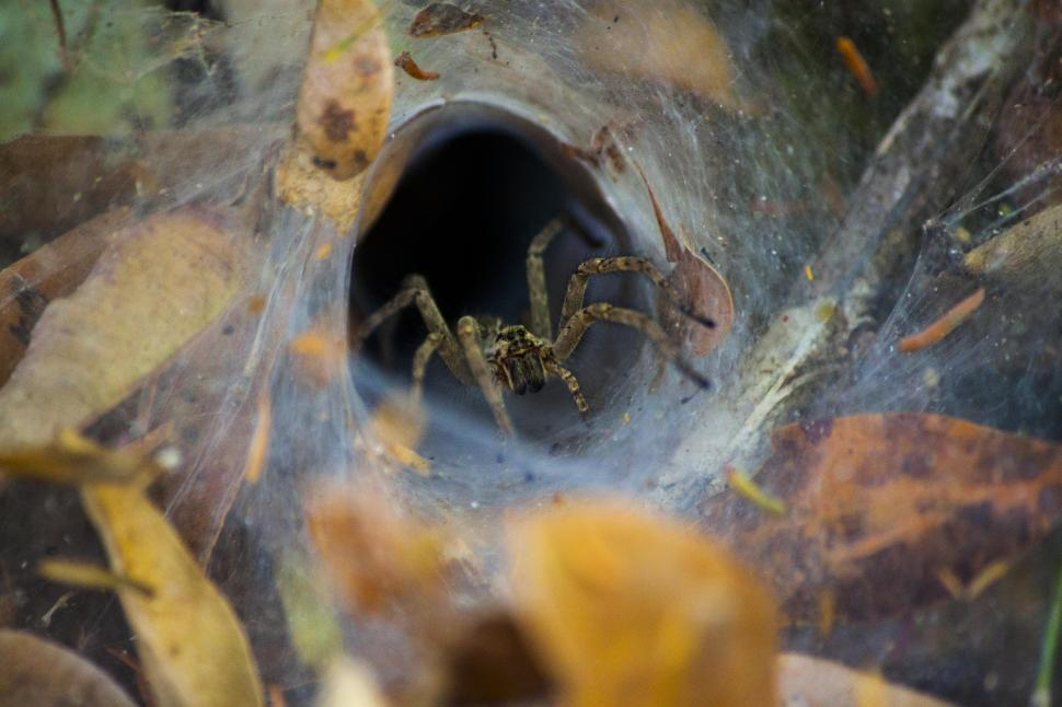 Download Free Stock HD Photo of Hole spider Online