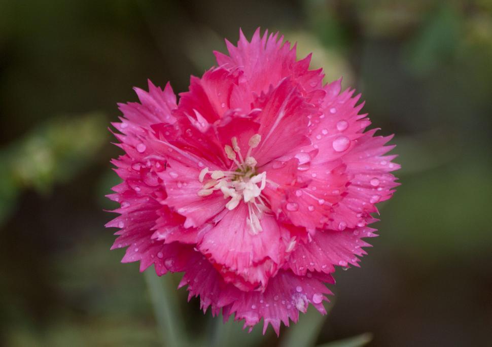 Download Free Stock HD Photo of Wet flower petals Online