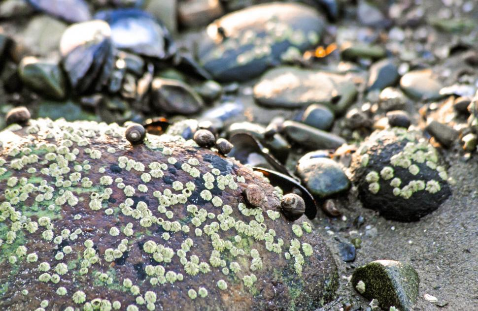 Download Free Stock HD Photo of Barnacles Online