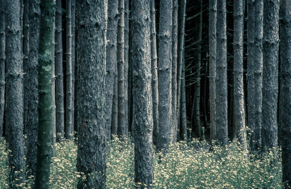 Download Free Stock HD Photo of Tree Trunks and Buttercup Flowers in Forest Online