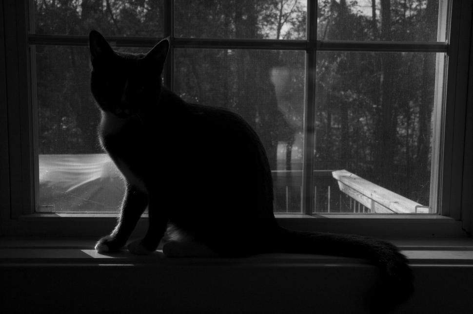 Download Free Stock HD Photo of Silhouette of Cat Online