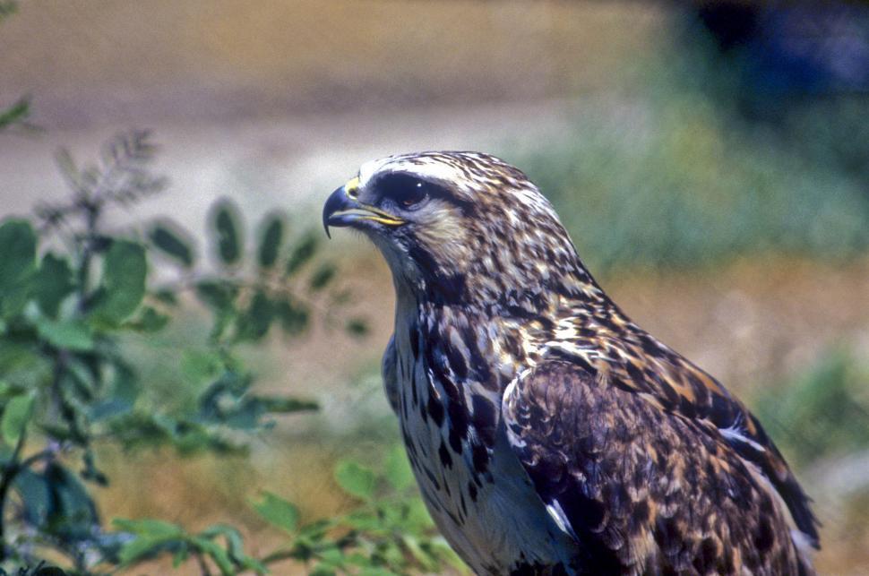 Download Free Stock HD Photo of samll hawk Online