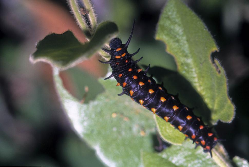 Download Free Stock HD Photo of black and orange caterpillar Online