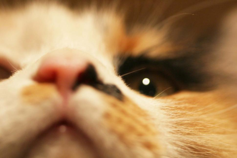 Download Free Stock HD Photo of Close up face of a calico cat Online