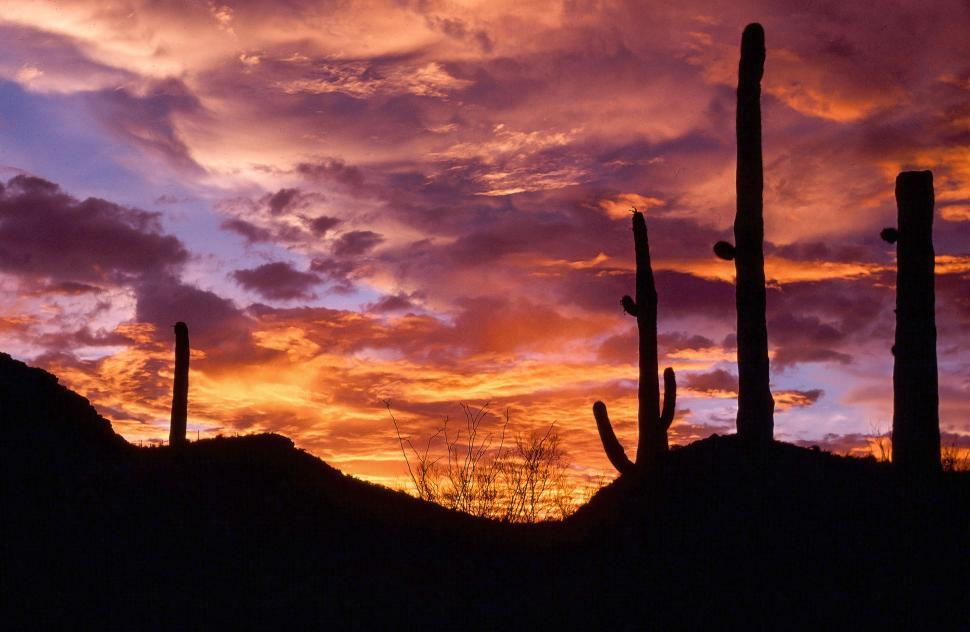 Download Free Stock HD Photo of Sunset with Saguaro Cactus Online